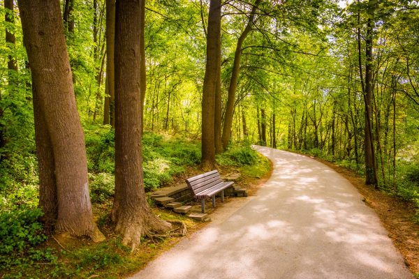A verdant woodland with a bench next to a walking path